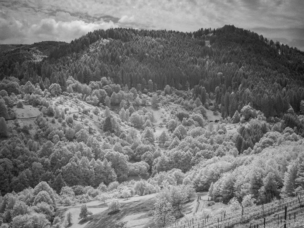 05.27.13.20.27 - Schwarzwald in IR.jpg