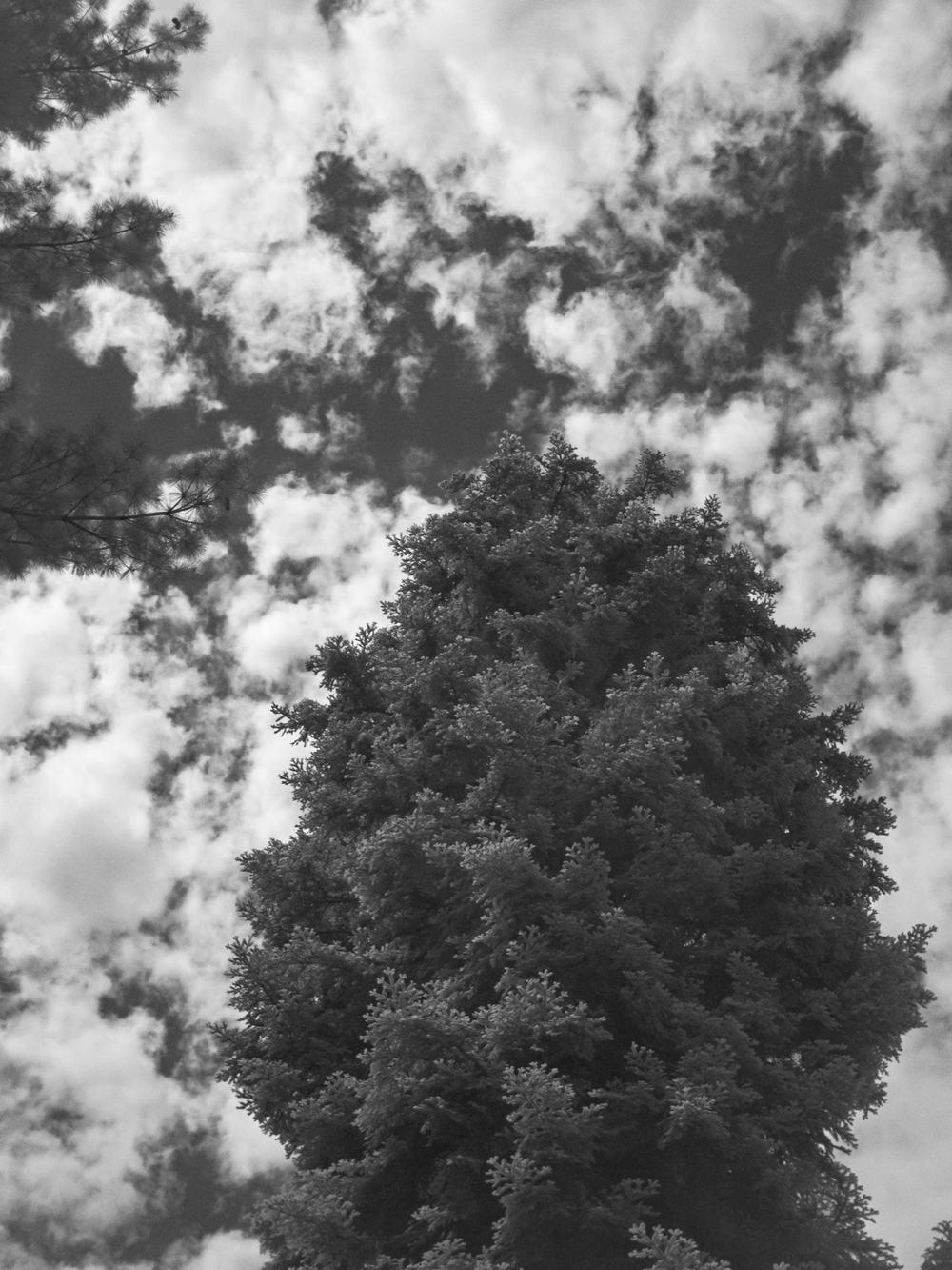 05.27.13.32.12 - Schwarzwald in IR.jpg