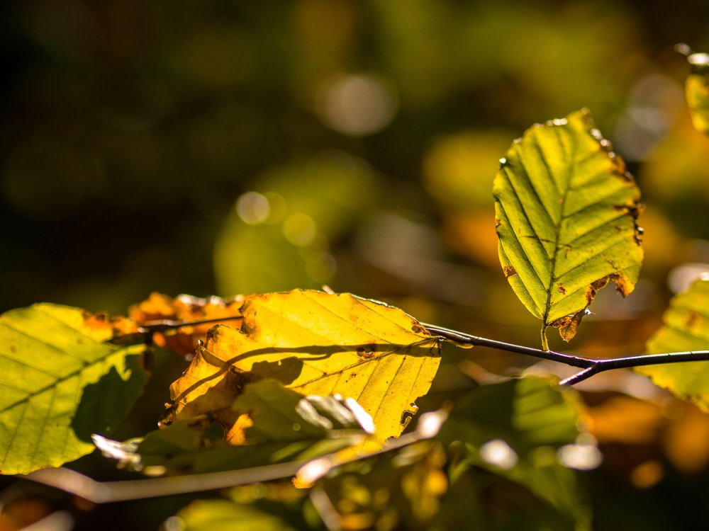 10.19.12.35.08 - Herbst 14 neu.jpg