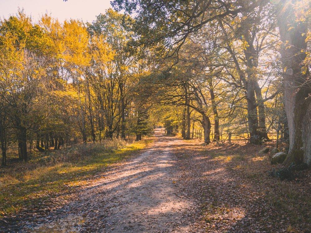 10.19.12.32.19 - Herbst 14 neu.jpg