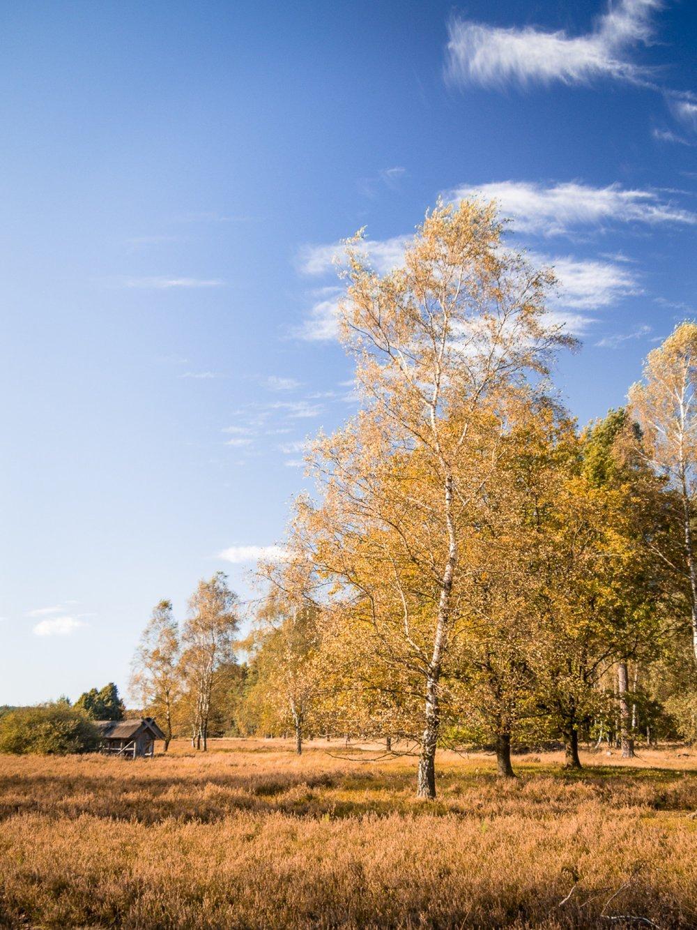 10.19.12.08.01 - Herbst 14 neu.jpg