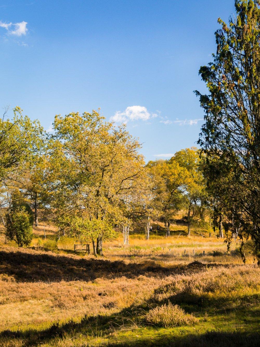 10.19.13.55.32 - Herbst 14 neu.jpg