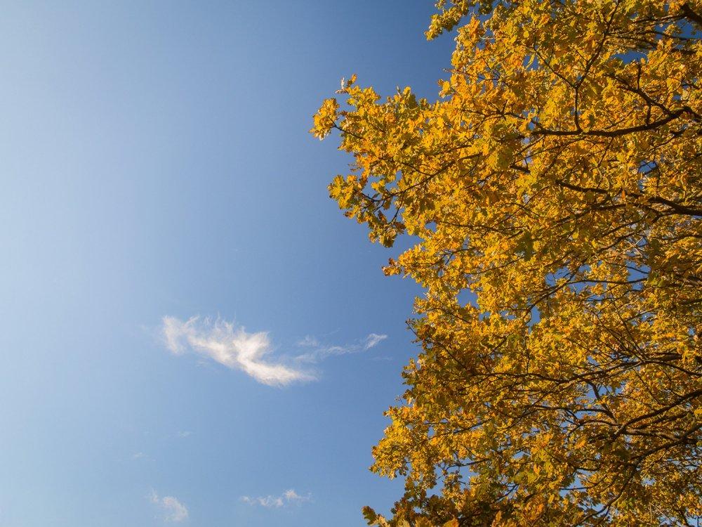 10.19.12.22.50 - Herbst 14 neu.jpg