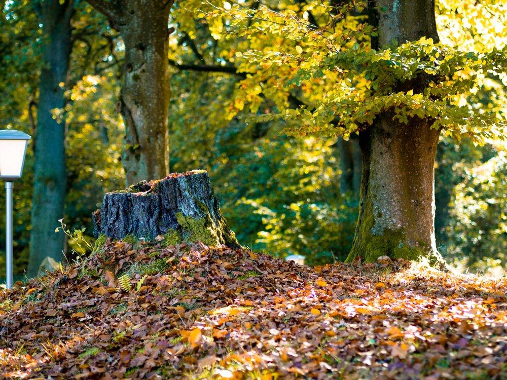 10.19.12.48.14 - Herbst 14 neu.jpg