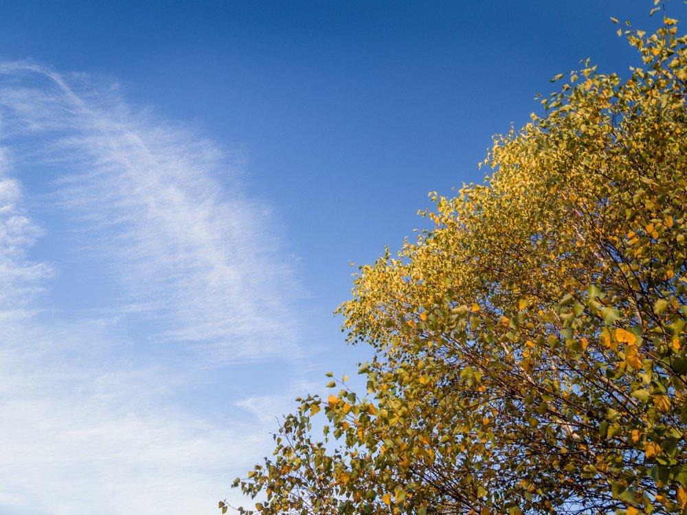 10.19.13.24.55 - Herbst 14 neu.jpg