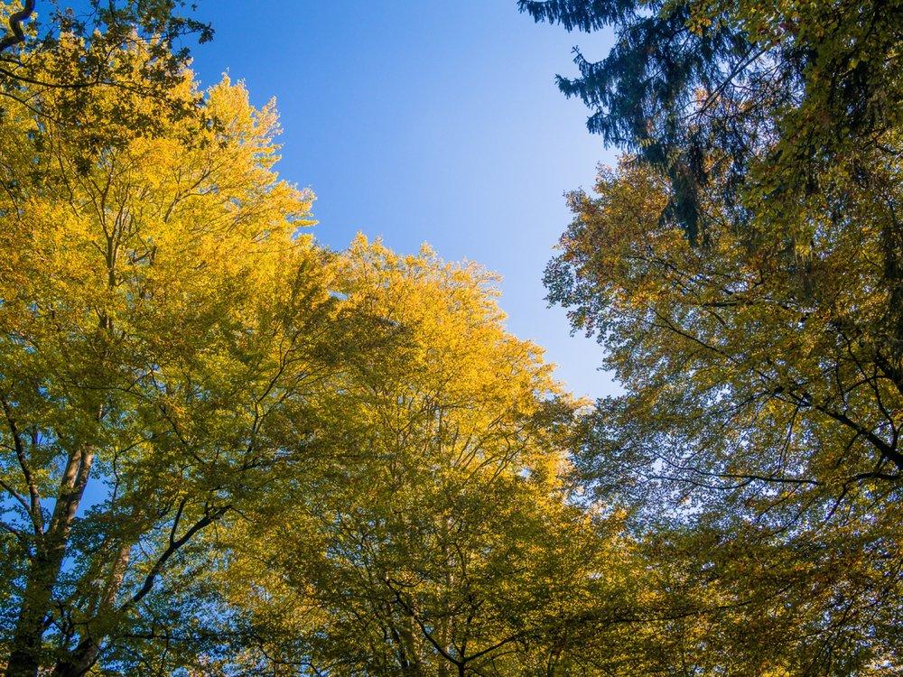 10.19.13.15.43 - Herbst 14 neu.jpg