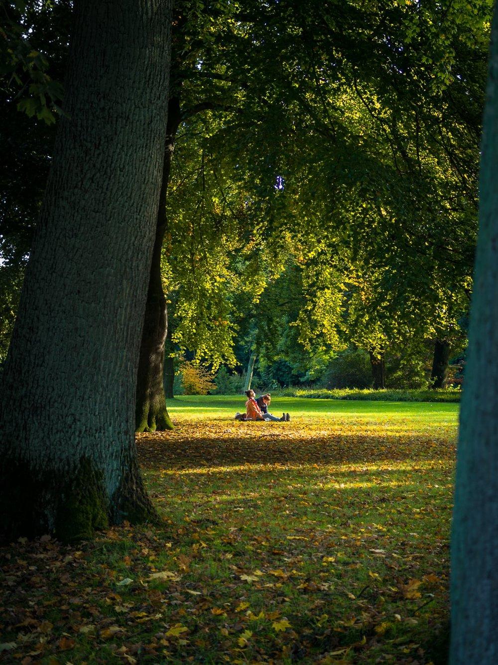 Herbstgold, Herbst, Blätter, Indian Summer, Bäume, Trees, Leaves, Autumn