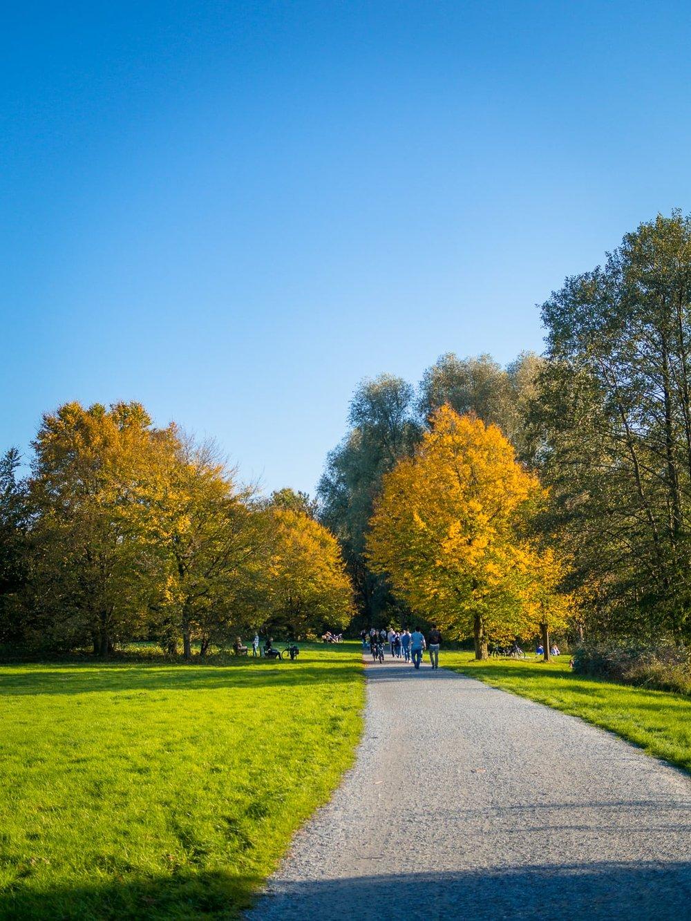 Herbstgold - Autumn Trees Leaves Bäume Blätter Herbst Gold Licht - 1649.jpg