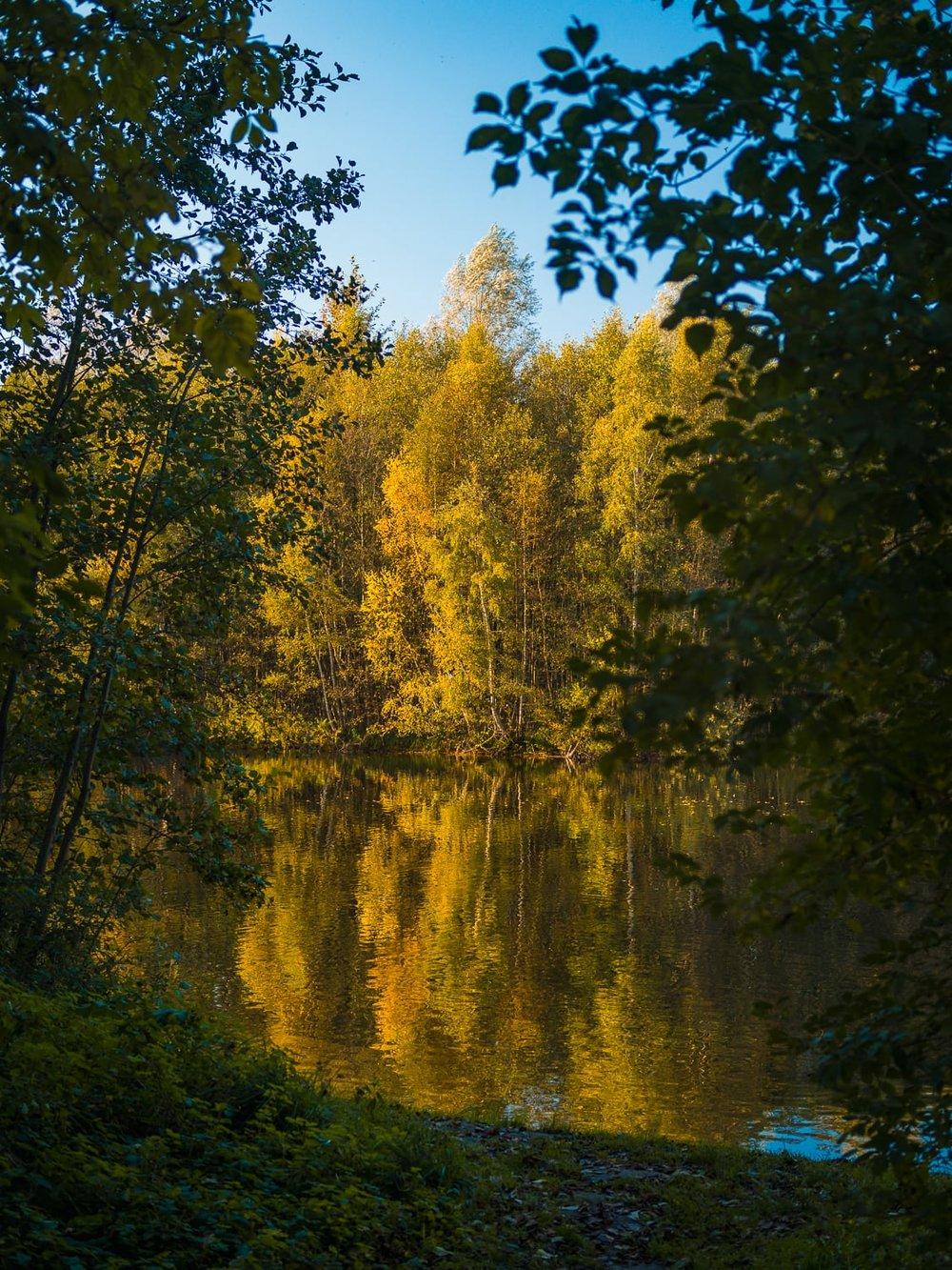 Herbstgold - Autumn Trees Leaves Bäume Blätter Herbst Gold Licht - 1618.jpg