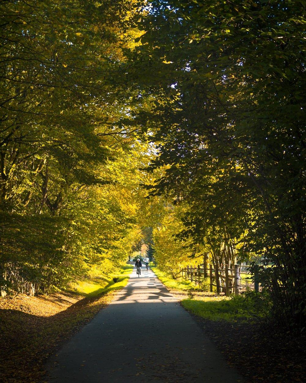 Herbstgold - Autumn Trees Leaves Bäume Blätter Herbst Gold Licht - 1657.jpg