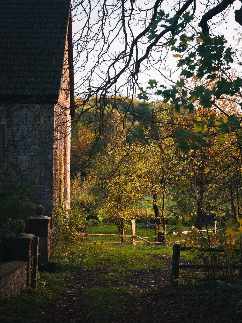 Herbstgold - Autumn Trees Leaves Bäume Blätter Herbst Gold Licht - 1736.jpg