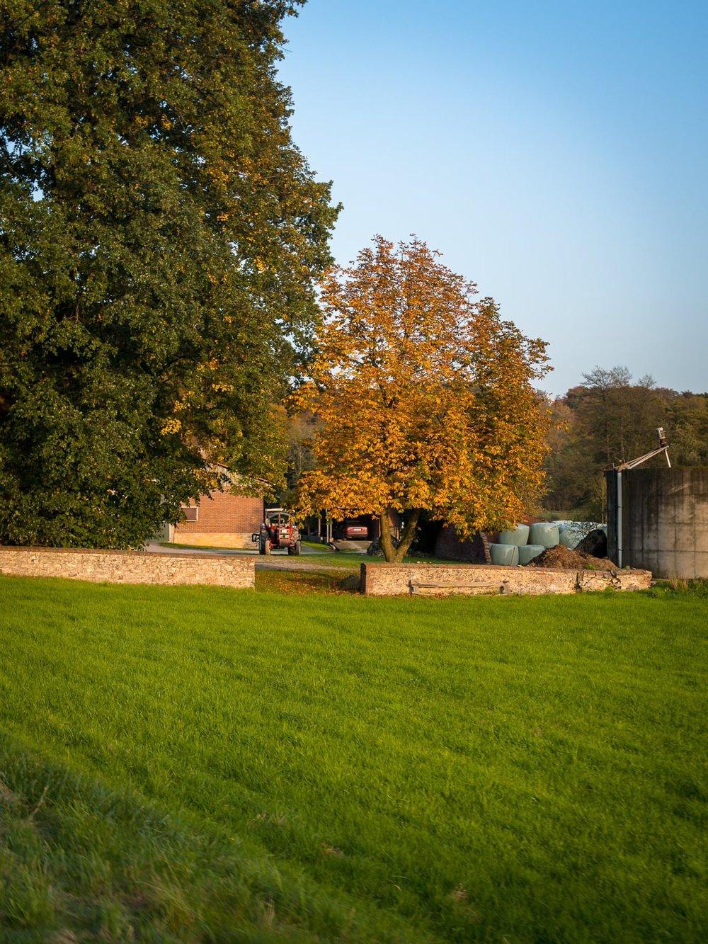 Herbstgold - Autumn Trees Leaves Bäume Blätter Herbst Gold Licht - 1737.jpg