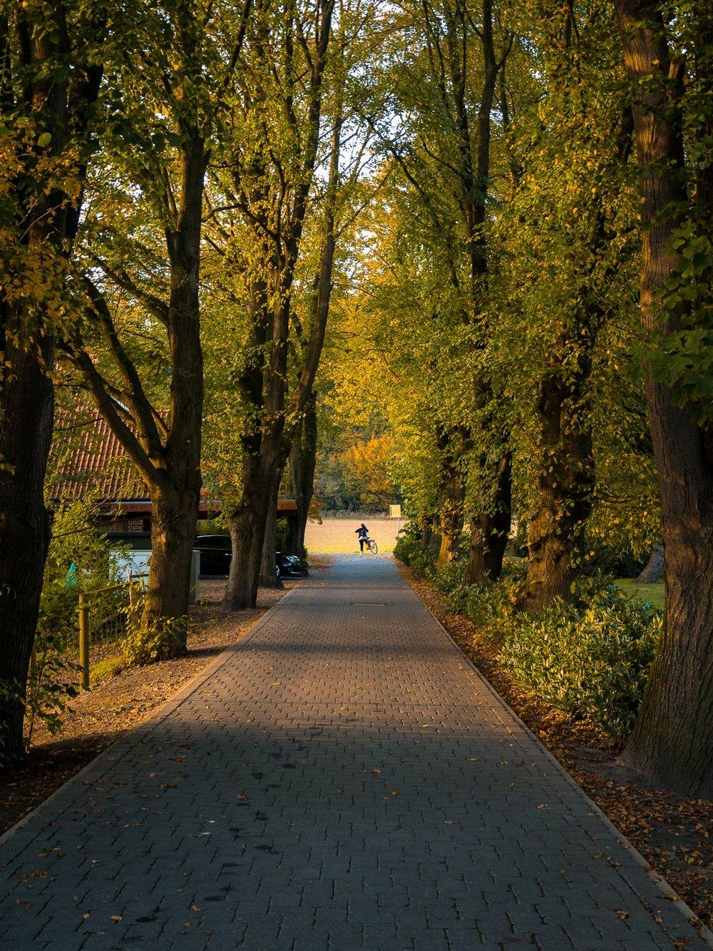Herbstgold - Autumn Trees Leaves Bäume Blätter Herbst Gold Licht - 1752.jpg