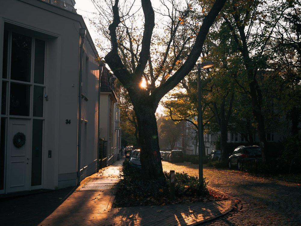 Herbstgold - Autumn Trees Leaves Bäume Blätter Herbst Gold Licht - 1556.jpg