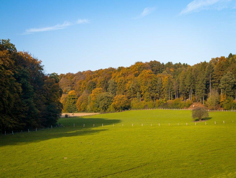 Herbstgold - Autumn Trees Leaves Bäume Blätter Herbst Gold Licht - 1610-2.jpg