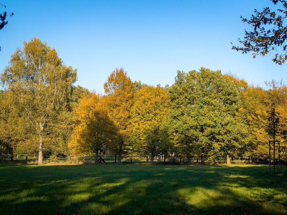 Herbstgold - Autumn Trees Leaves Bäume Blätter Herbst Gold Licht - 1651.jpg