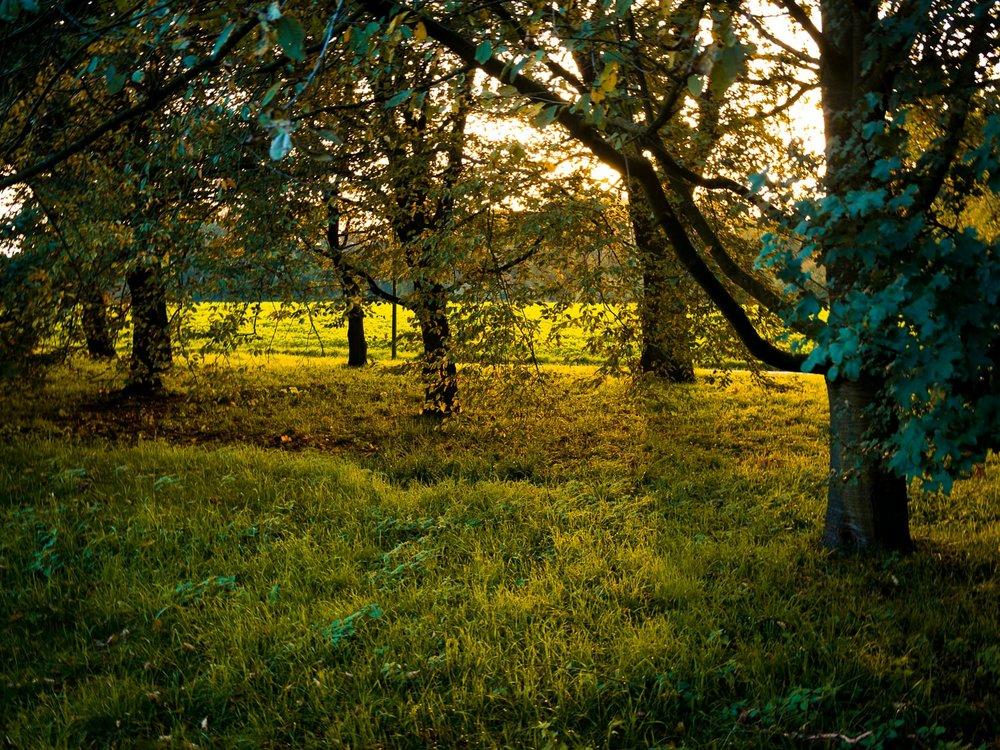 Herbstgold - Autumn Trees Leaves Bäume Blätter Herbst Gold Licht - 1802.jpg