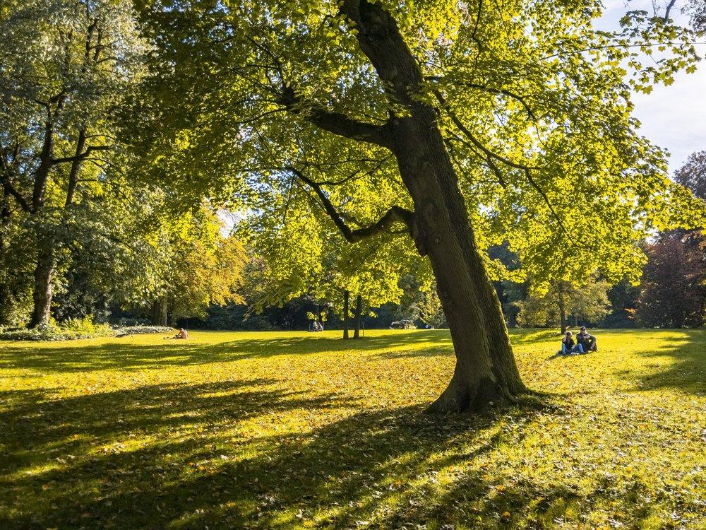 APC_0095-hdr - Herbst ShotoniPhone Autumn Blätter Leaves Sun Sonne Light Threes Licht Bäume Baum Stadt Osnabrück.jpg