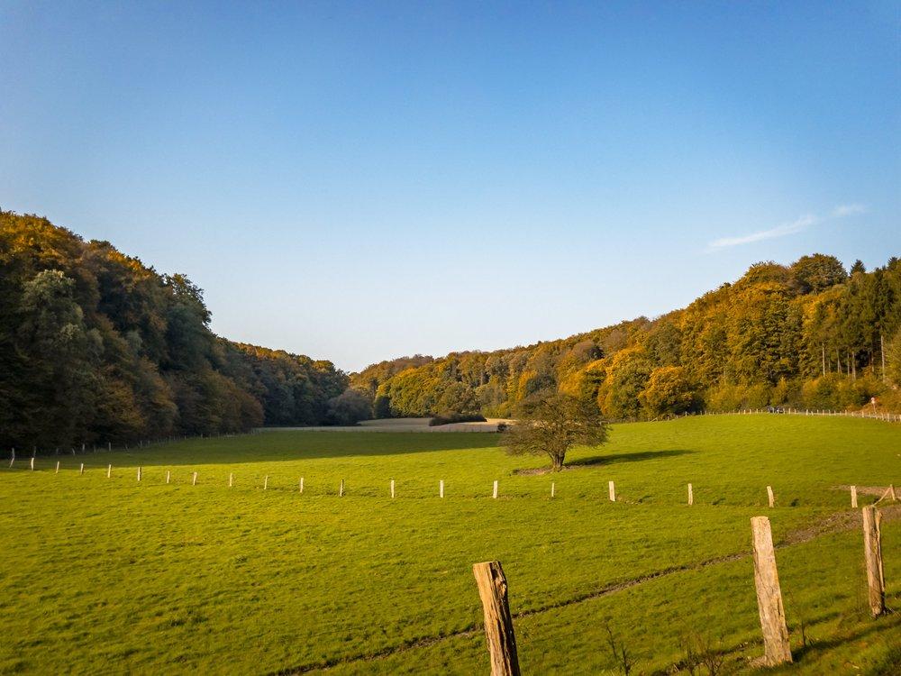 APC_0432-hdr - Herbst ShotoniPhone Autumn Blätter Leaves Sun Sonne Light Threes Licht Bäume Baum Stadt Osnabrück.jpg