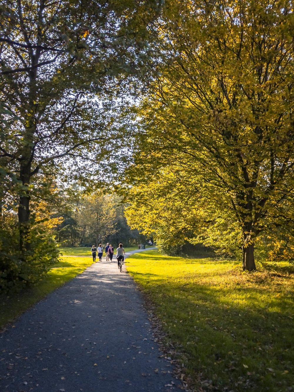 APC_0384-hdr - Herbst ShotoniPhone Autumn Blätter Leaves Sun Sonne Light Threes Licht Bäume Baum Stadt Osnabrück.jpg