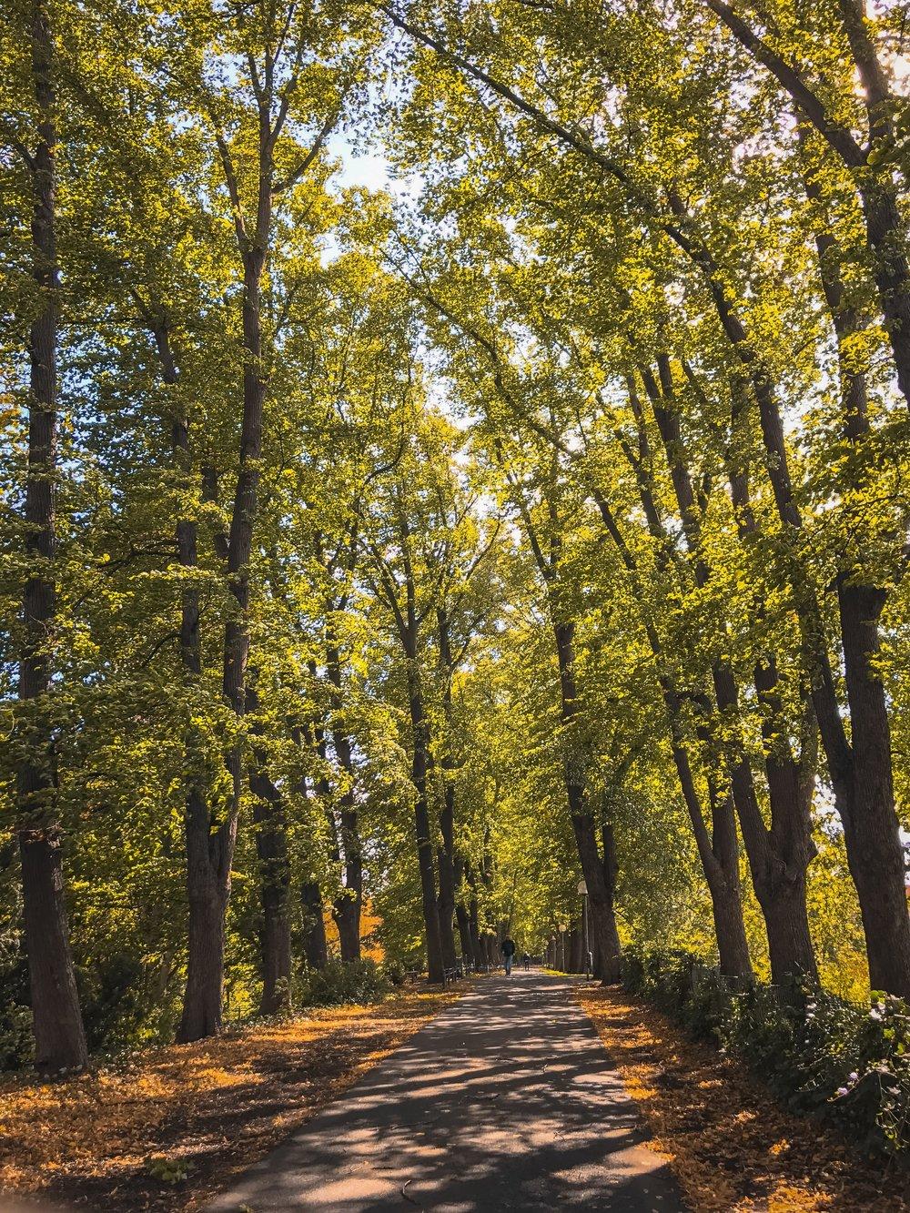 IMG_5643-2 - Herbst ShotoniPhone Autumn Blätter Leaves Sun Sonne Light Threes Licht Bäume Baum Stadt Osnabrück.jpg
