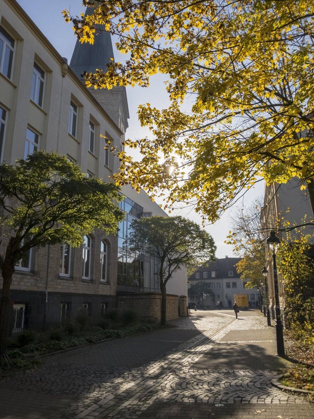 APC_0670-hdr - Herbst ShotoniPhone Autumn Blätter Leaves Sun Sonne Light Threes Licht Bäume Baum Stadt Osnabrück.jpg