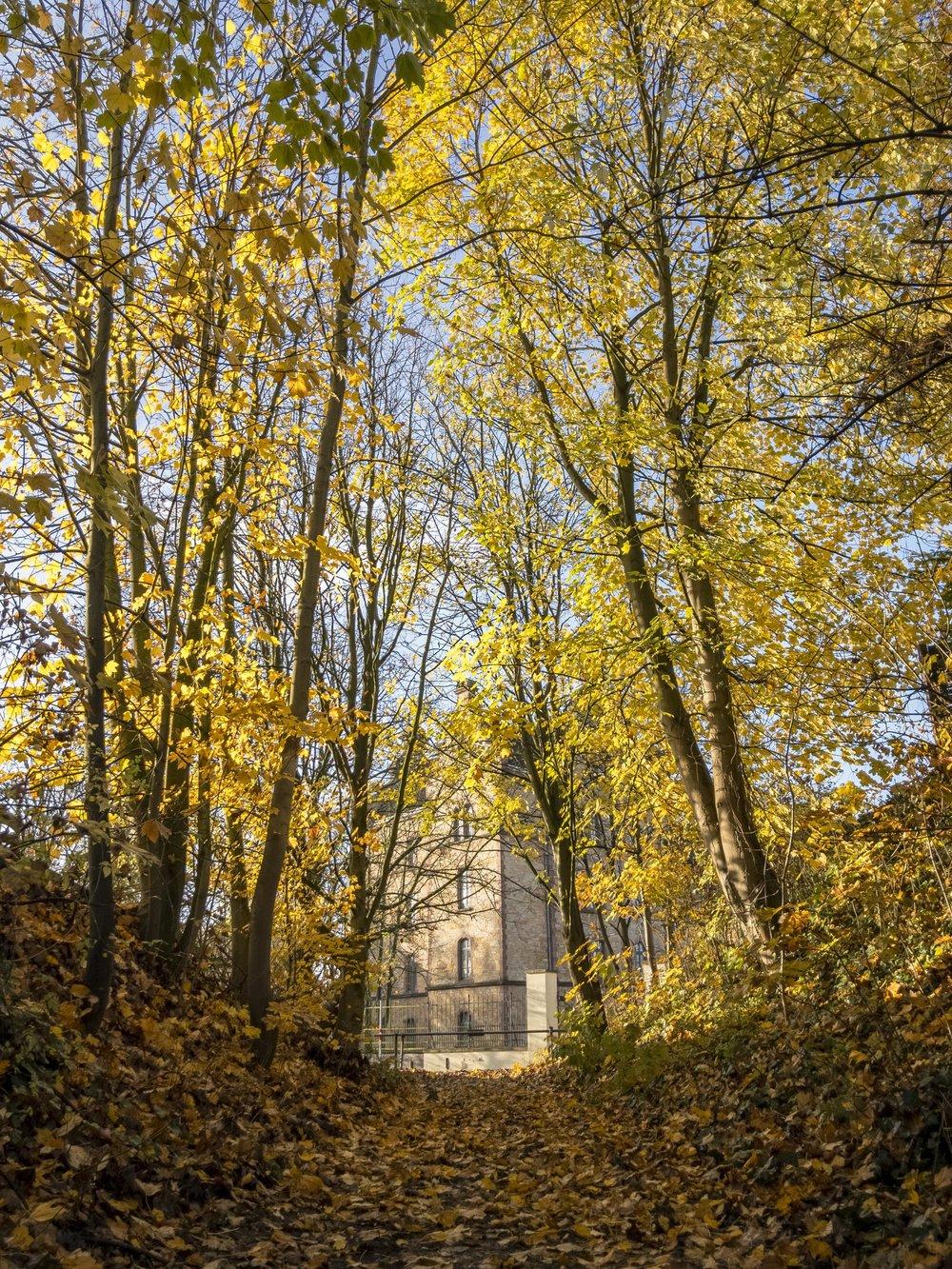 APC_0889-hdr - Herbst ShotoniPhone Autumn Blätter Leaves Sun Sonne Light Threes Licht Bäume Baum Stadt Osnabrück.jpg