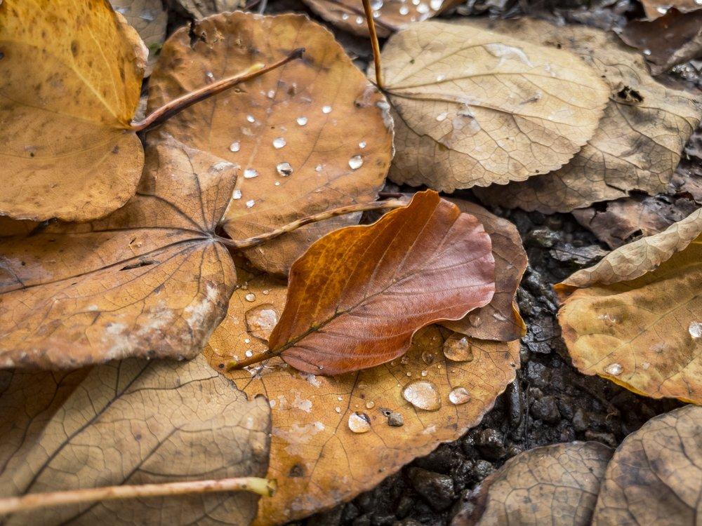 APC_0113-hdr - Herbst ShotoniPhone Autumn Blätter Leaves Sun Sonne Light Threes Licht Bäume Baum Stadt Osnabrück.jpg