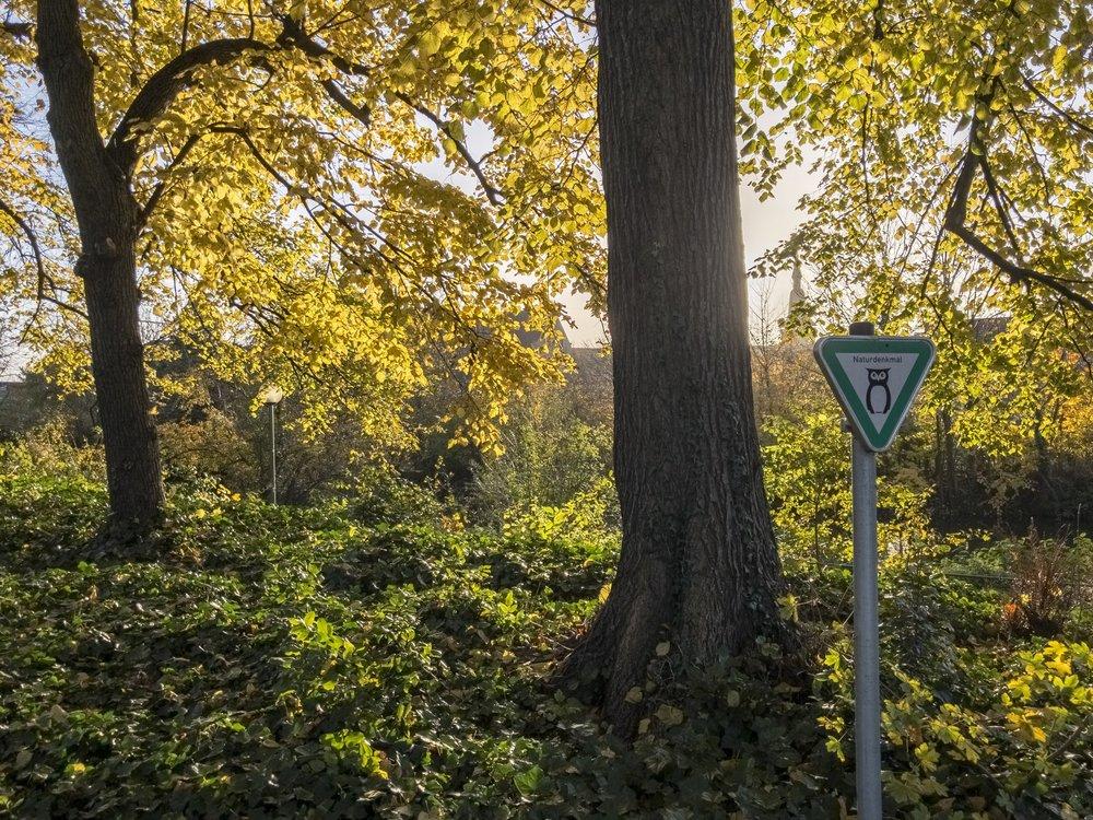 APC_0796-hdr - Herbst ShotoniPhone Autumn Blätter Leaves Sun Sonne Light Threes Licht Bäume Baum Stadt Osnabrück.jpg