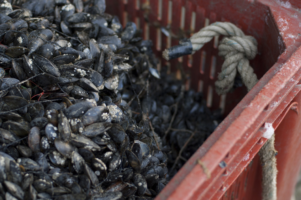 Visit of a mussel farm