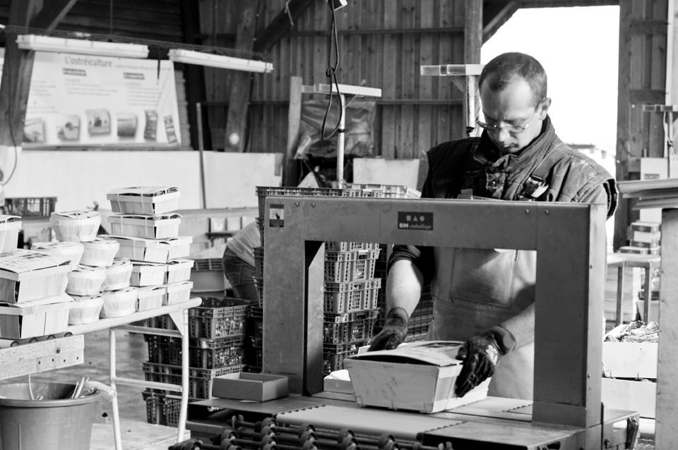 Oyster farm worker