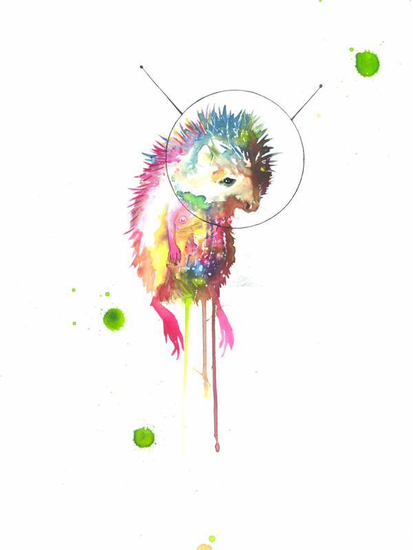 Cosmo Hedgehog