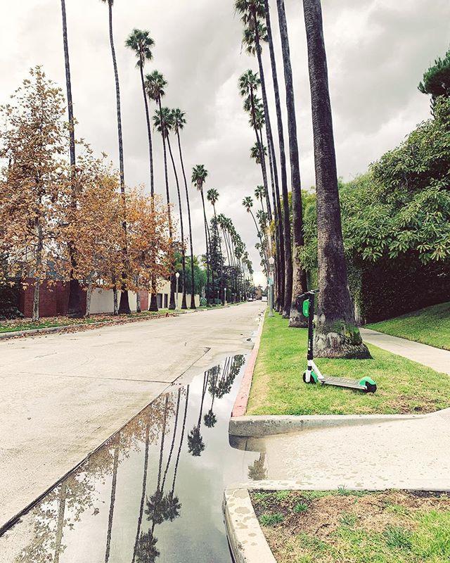 rainy day in LA #WindsorSquare