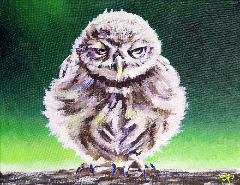 "Grumpy Owl, 11""x14"" Acrylic on Canvas, Commissioned to Sue Dorr, 2015"