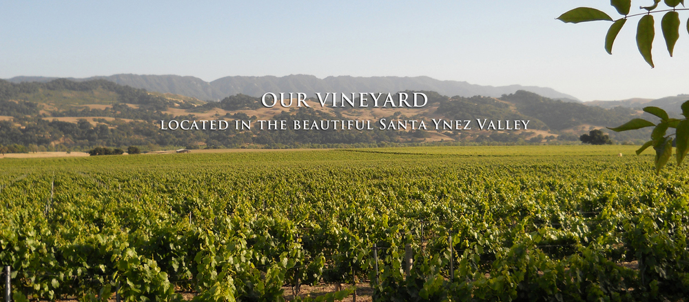 altman_vineyard.jpg
