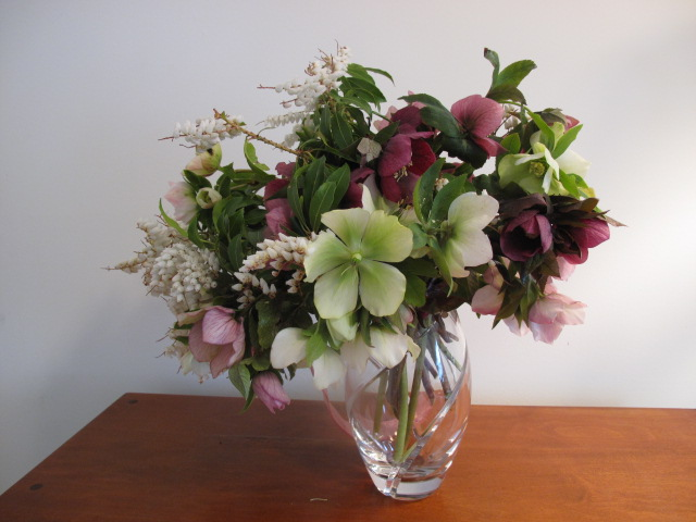 Softly arching hellebores and andromeda