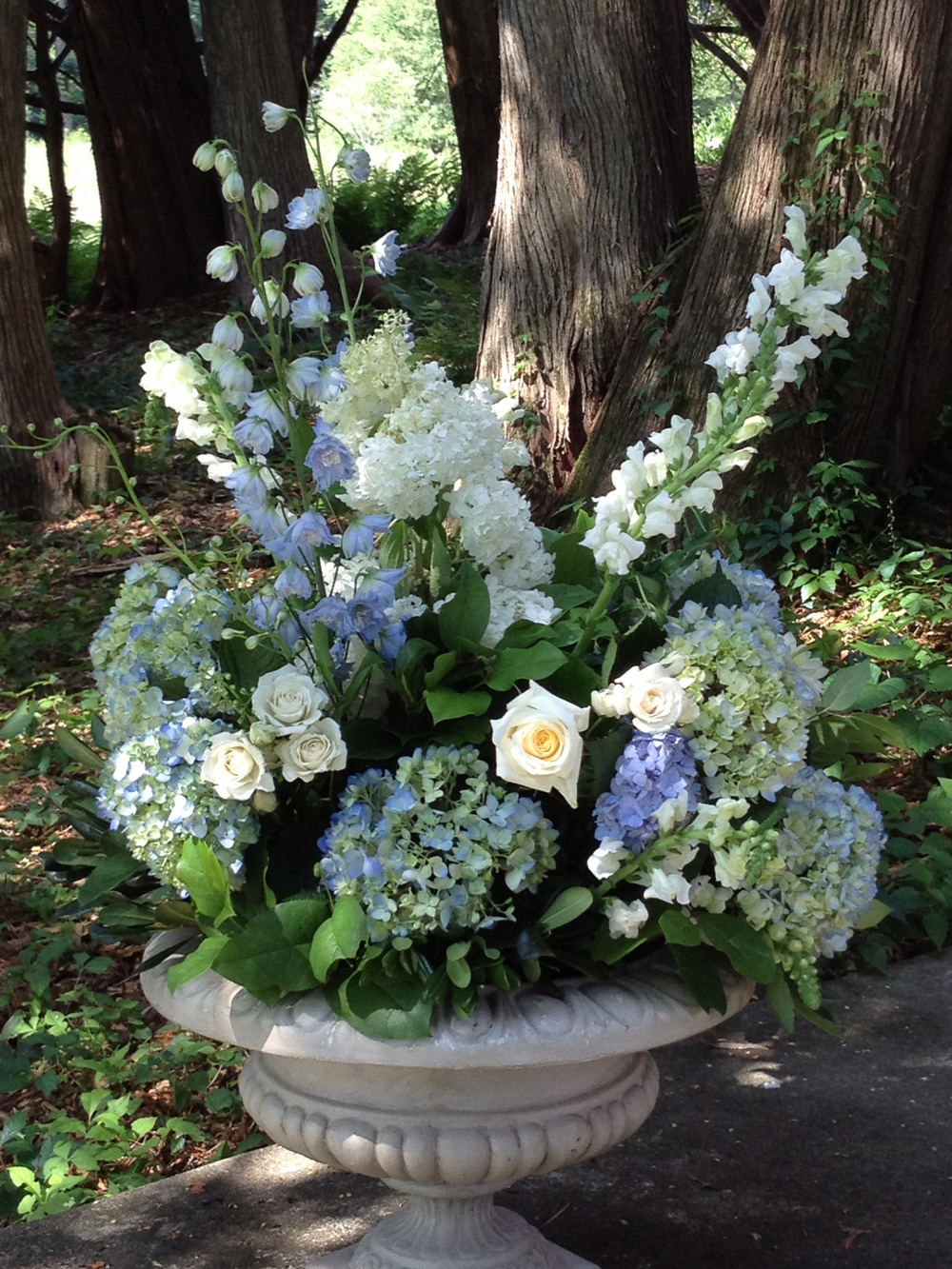Blue hydrangea in woodland.JPG
