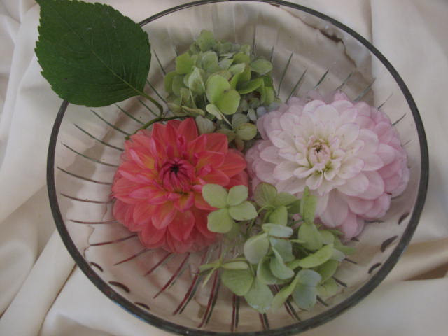 Dahlias and green hydrangea.JPG