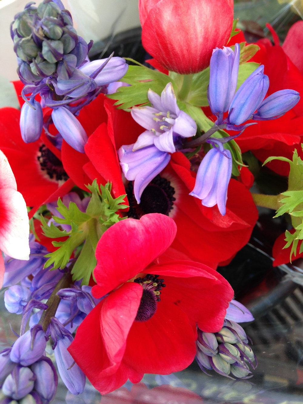 Anemones from Butternut Gardens enjoying the company of Scilla.
