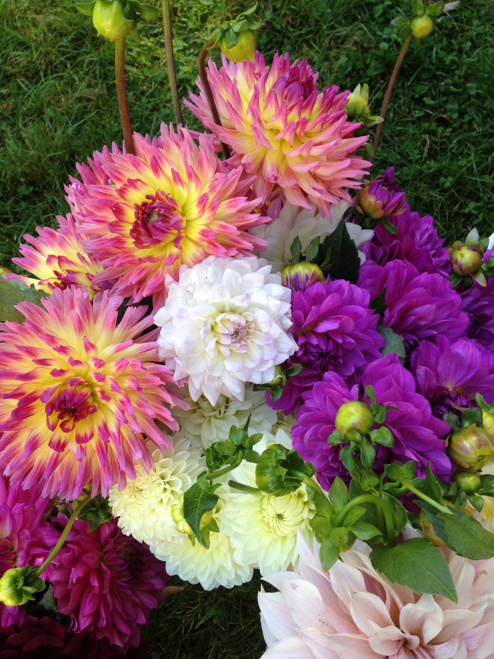 Cut Blooms 3.JPG