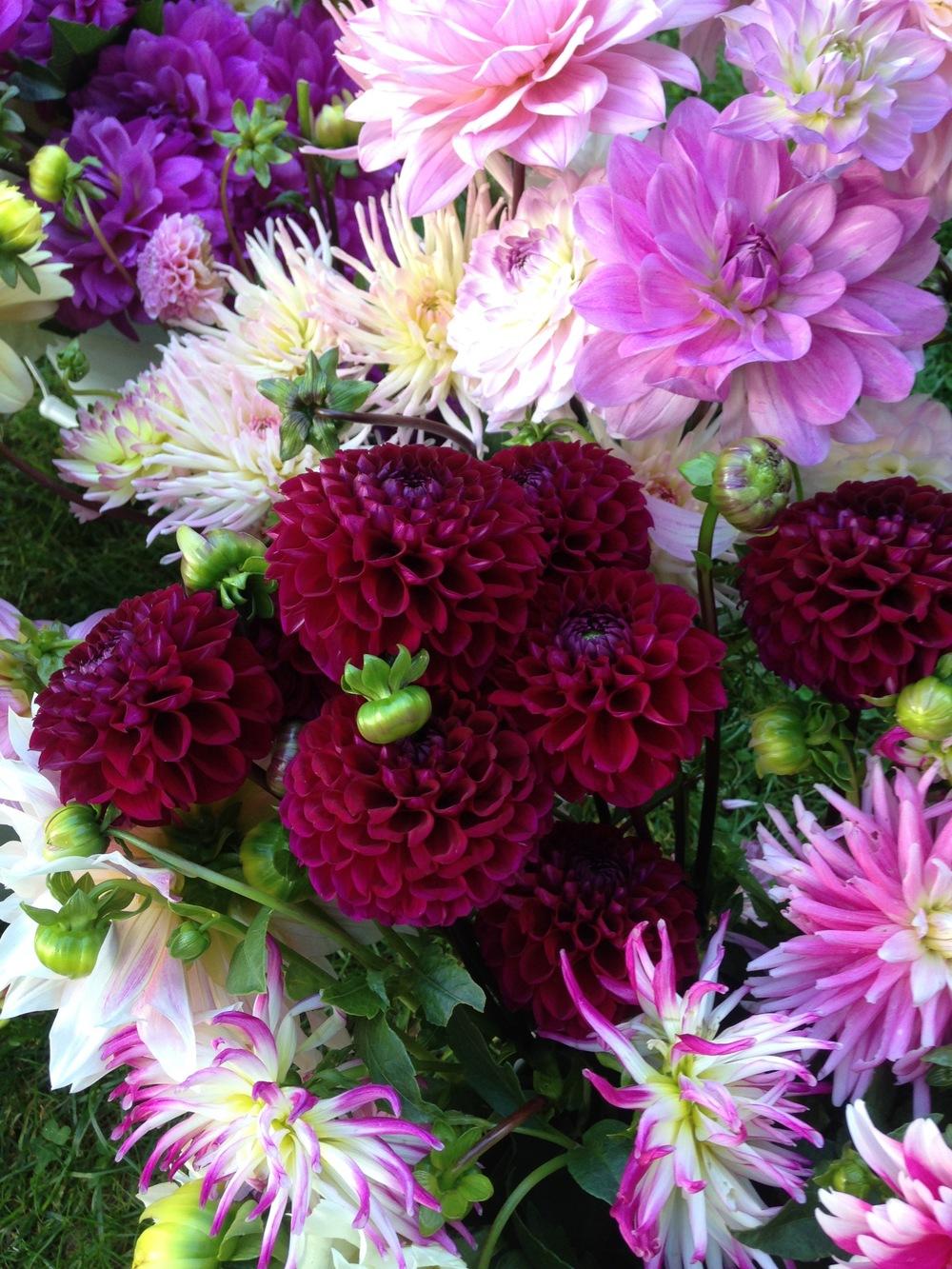 Cut Blooms 4.JPG