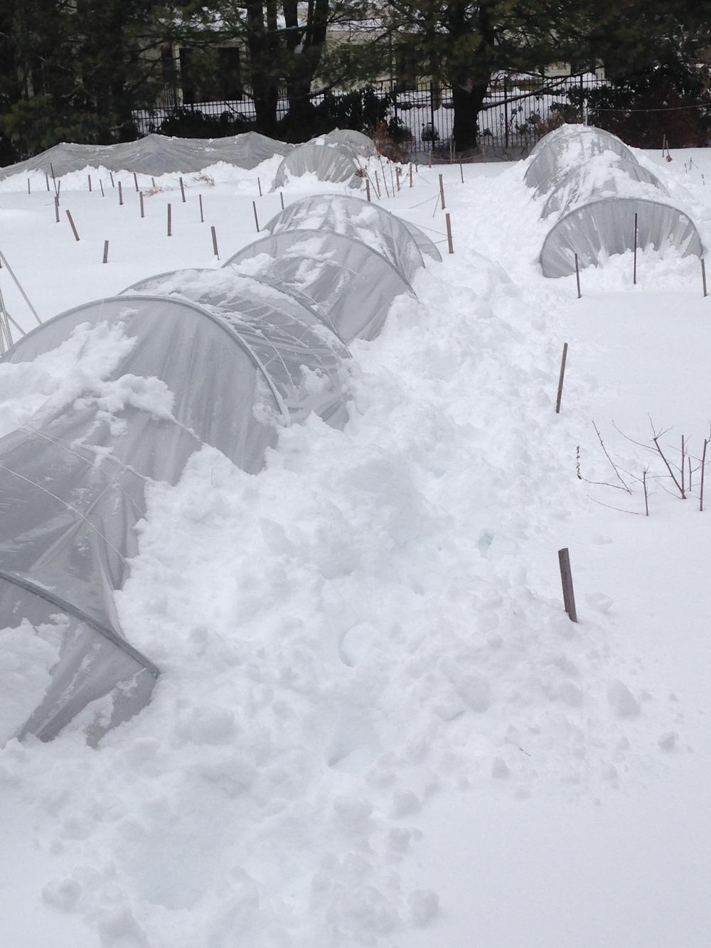 Caterpillar tunnels keeping things warm at Butternut Gardens