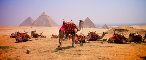 camels in front of the great pyramids