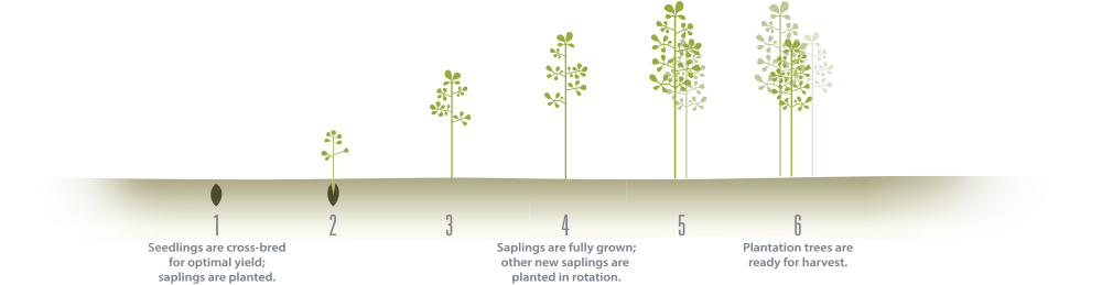 Treating trees like crops give Solaris Paper several advantages and a fascinating story. Watch the video below.