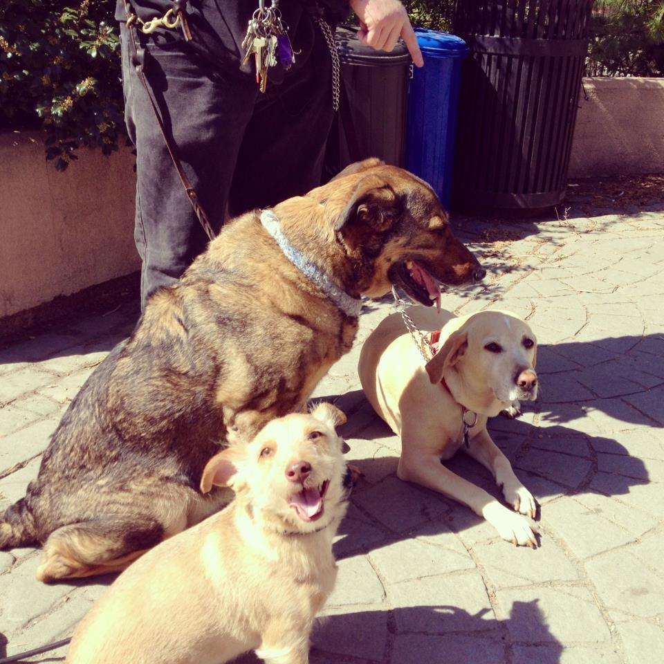 Milo calmly meeting friends. Prior to Milo's balanced training experience meeting other dogs was simply not possible. He was a growling, lunging, barking, hysterical mess. -Now, thanks to Good Karma Training, he can calmly greet other dogs.