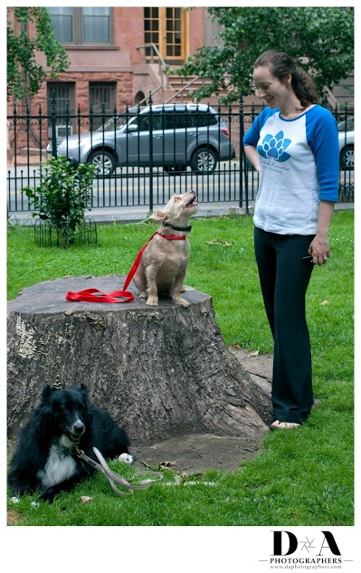 My method of training creates engagement with your dog, without the use of food.