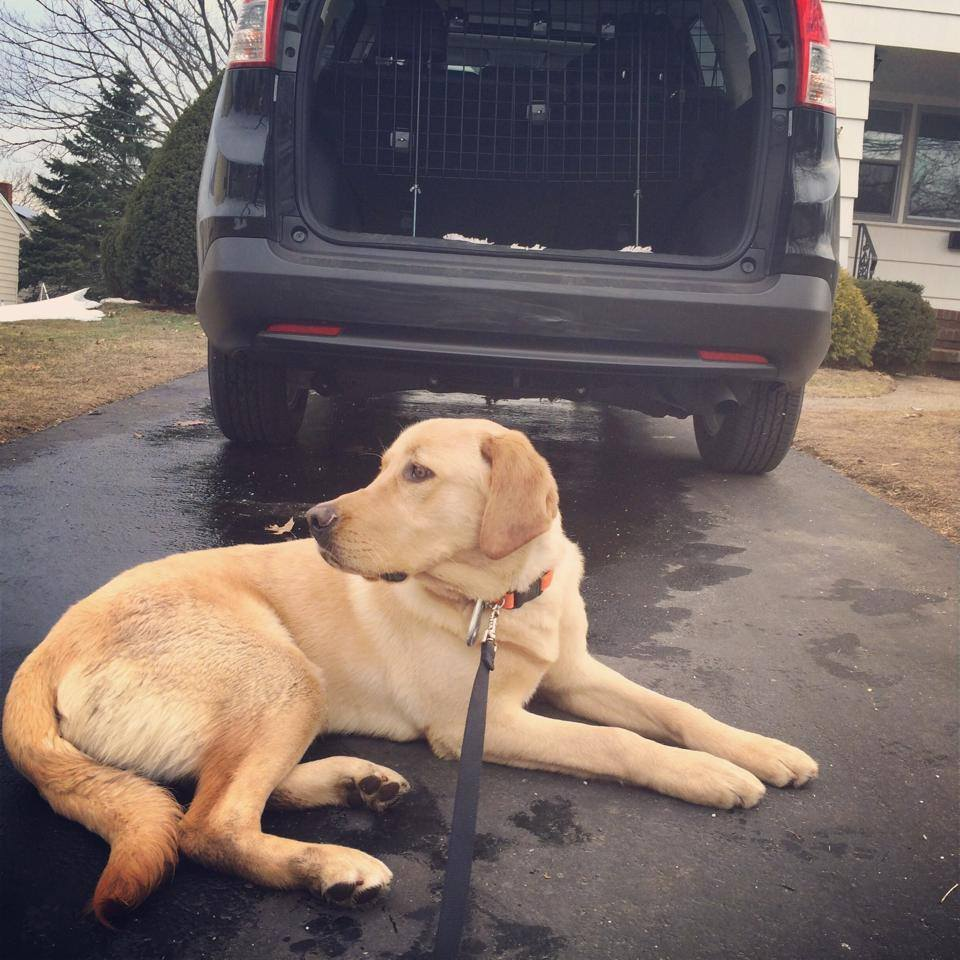 This is the behavior you want to see before you give the command for your dog to enter your car.