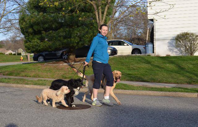 Pack walking is a service offered by Good Karma Training during Board and Train.