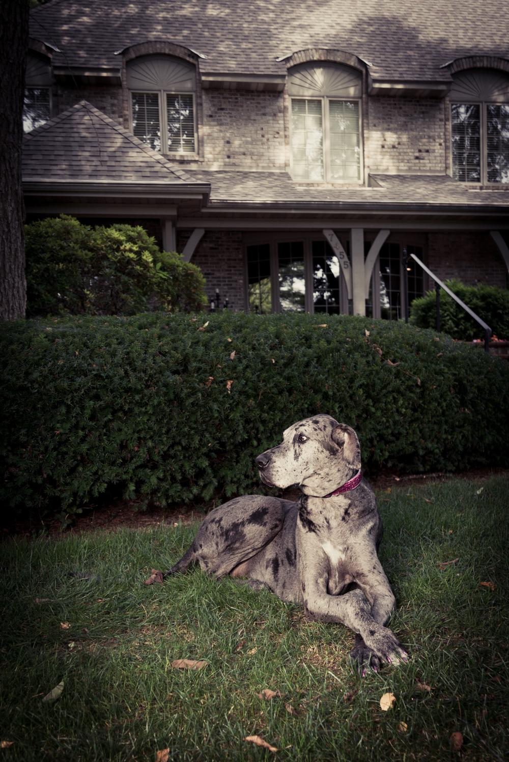 portage-michigan-pet-family-photographer-maggie3