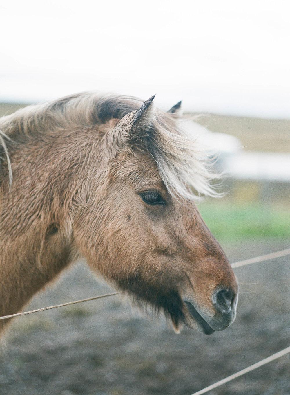 Kristen_Humbert_Film_Photographer_Iceland_2017-65150011.jpg